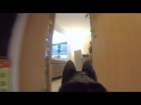 UNSEREN HUND MIT GoPro KAMERA ALLEINE ZUHAUSE GELASSEN !!! | PrankBrosTV