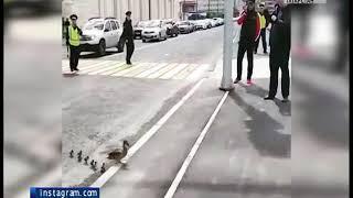 В Казани сотрудник ДПС помог перейти дорогу многодетной утке