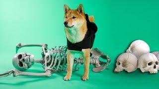 Shiba Defeats Spooky Skeleton