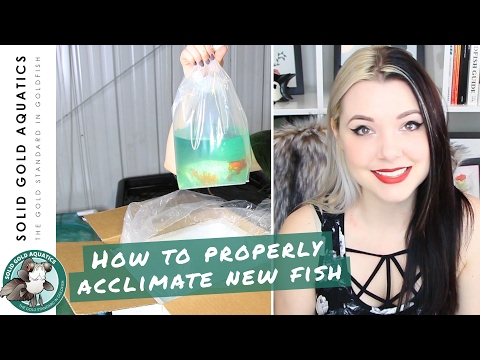 How to Properly Acclimate New Fish