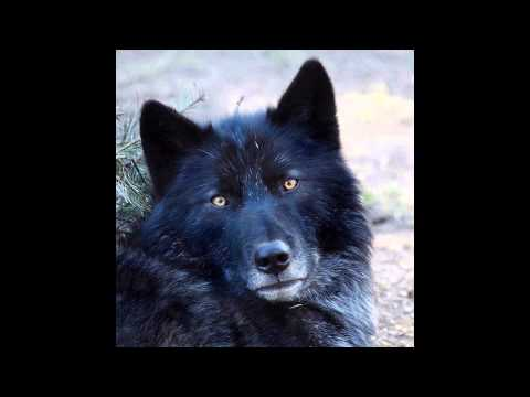 'Let the Wolves run free' by Ratty and the Watchers