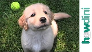 How to choose a puppy that's right for you - How to pick a puppy