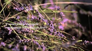 Lavender Farmers of Provence (in French) - by L'Occitane En Provence