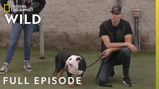 The Tormentor (Full Episode) | Dog Impossible by Nat Geo WILD