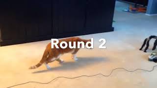 "Приколы. Коты НЕ железные яйца!  Коты VS Паук.!!!"""