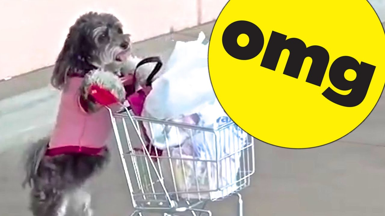 9 Dogs You Won't Believe Actually Exist thumbnail
