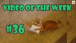 Video of the week 36 - Cat attacks singing card