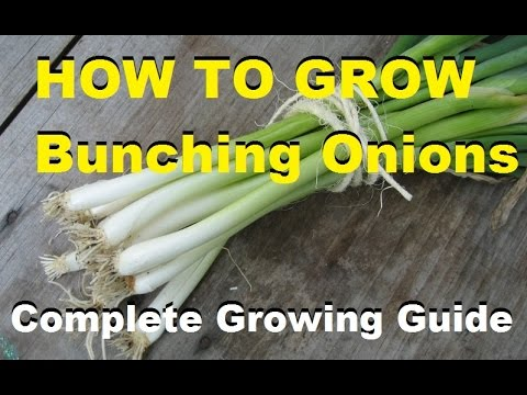 , title : 'How To Grow Bunching Onions - Complete Growing Guide