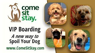 Pet Boarding Video for Come Sit Stay in Parker Colorado