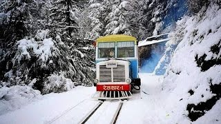 Heavy Snowfall In Shimla