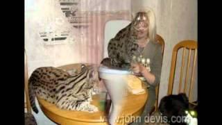 Виверровый кот рыболов джон девис