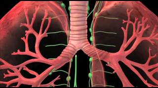 Lung Cancer Treatment Video In India