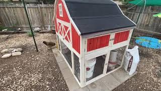 Mice in the Chicken Coop - Five Minute Chicken Tips!