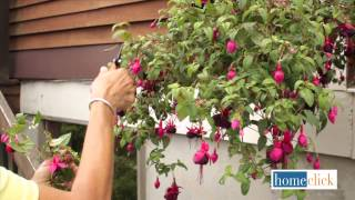 How to Revive Hanging Baskets