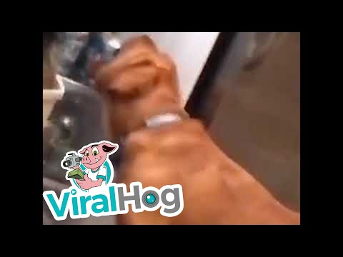 כלב מביא בירה מהמקרר לפי פקודה