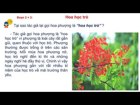 TẬP ĐỌC LỚP 4 - HOA HỌC TRÒ