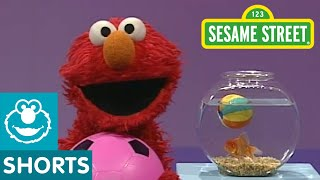 Sesame Street: Elmo's World: Play Ball!