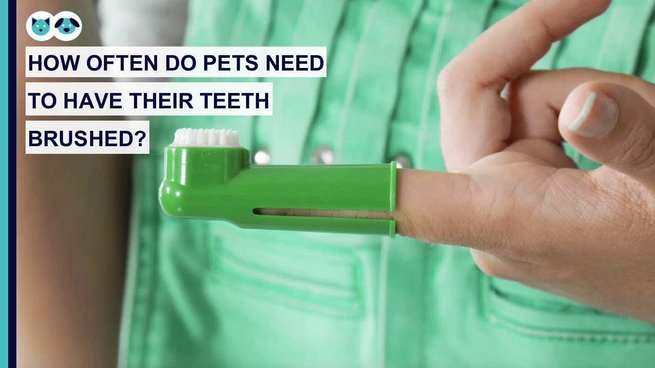 How Often Do Pets Need to Have Their Teeth Brushed?
