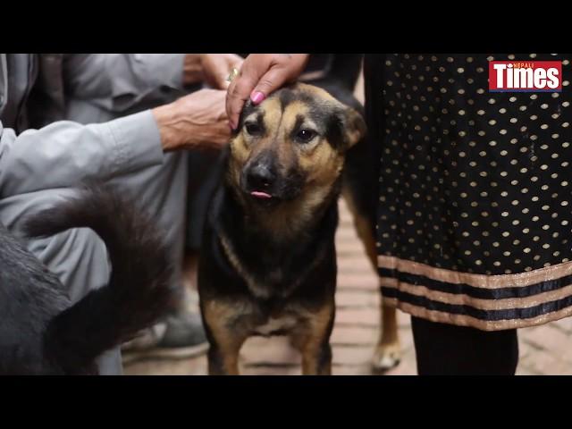 Bhaktapur's dog catchers