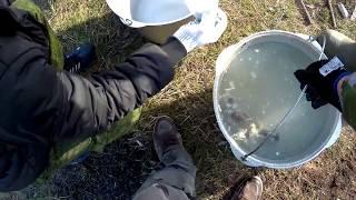 Сом елец рыбалка в контакте