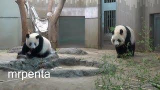 今日のシャンシャン9月9日上野動物園香香パンダ