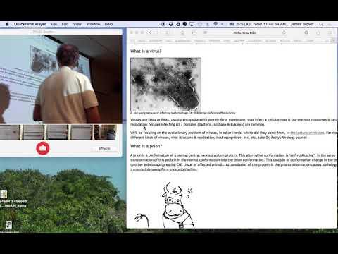 A galandféreg epidemiológiájának etiológiája