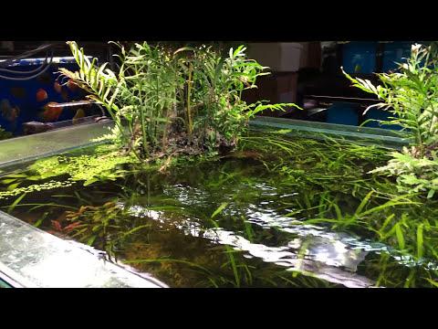 Nature Aquarium Store!