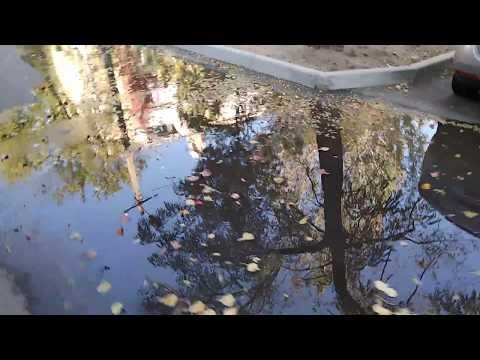 У людей под носом канализация. В Николаеве на Карпенко во дворах опять течет канализация