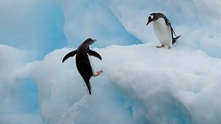 Top 10 Funny Penguin Videos 2015