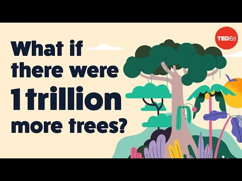 The Surprising Effect Trees Really Have on Climate Change