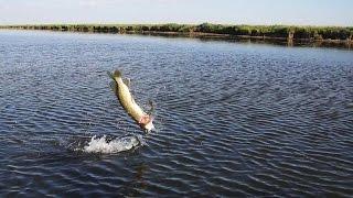 Рыбалка в казахстане озеро челкар казахстан