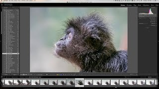Lightroom Quick Tips - Episode 130: The Power of Auto Stacking