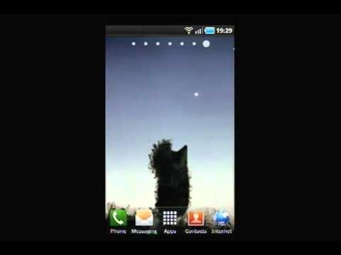 Video of Hedgehog in the Fog LWP
