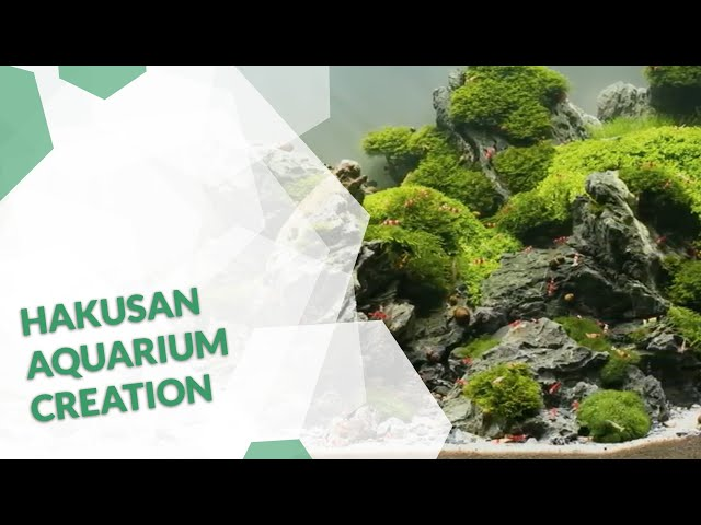 The Hakusan Film Aquascaping from project initialization to final Aquarium creation  4K video