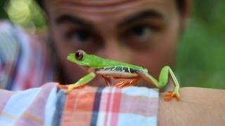 Folge dem Frosch!