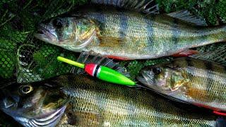 Рыбалка наживка живец