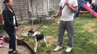 SLIP LEAD BASICS: introduction to leash pressure and utilising it on a walk