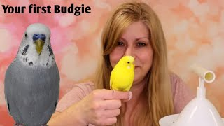 Advice on getting your first budgie