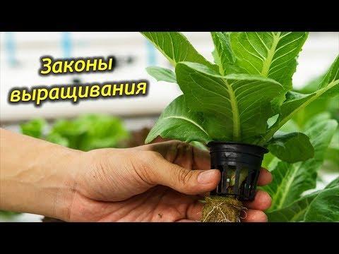 Законы успешного выращивания комнатных растений!
