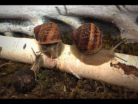 Zeftriakson von den Würmern