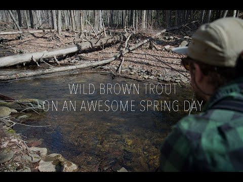 Wild Brown Trout on an Awesome Spring Day!