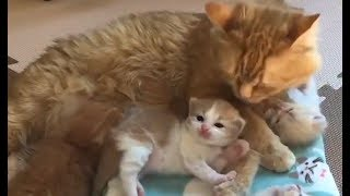 Смешные Kошки и Милые Котята 2019 ♥ Cat Marabacha #38