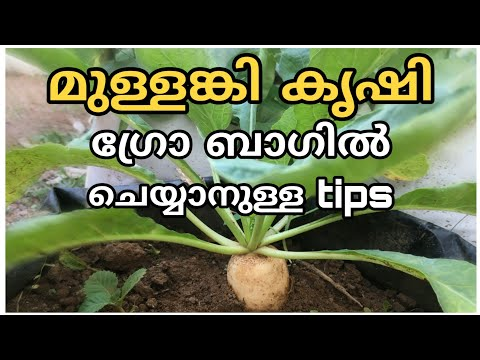 , title : 'Mullangi krishi malayalam | How to grow radish at home adukkalathottam | vegetable krishi in terrace
