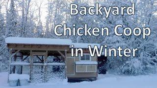Backyard Chicken Coop In Winter