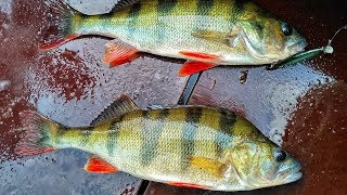 Crazy fish nano minnow 1 6