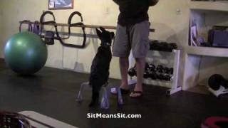 preview picture of video 'Sit Means Sit Hawaii German Shepherd Puppy training Day #8'