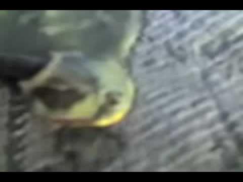 Pesca segreta di video