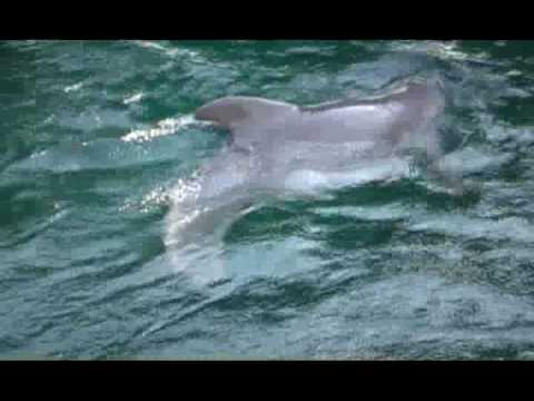 ª» Streaming Online The Dolphin