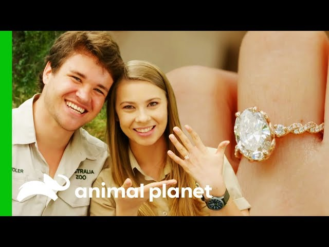 Bindi And Chandler Are Engaged! | Crikey! It's The Irwins