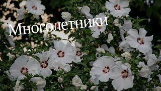 Многолетние цветы для дачи. Садовые цветы. Многолетние растения. Цветы многолетники. Цветоводство